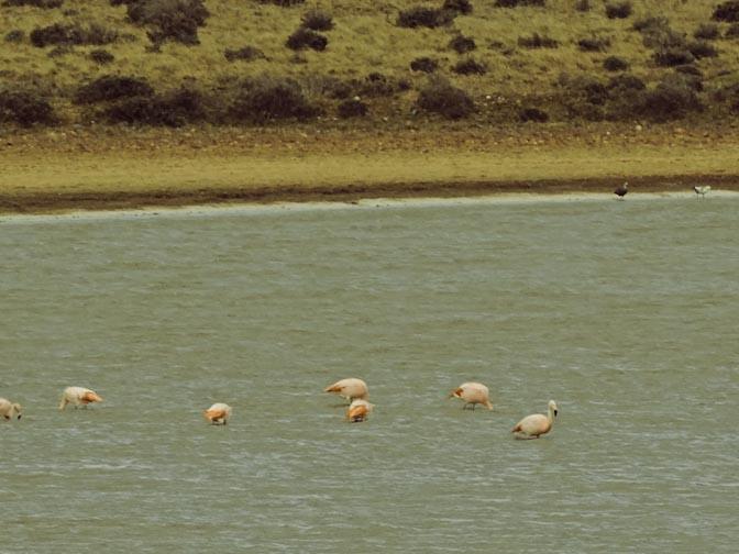 Flamingos?!