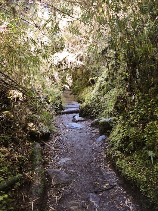 ...durch den Urwald.